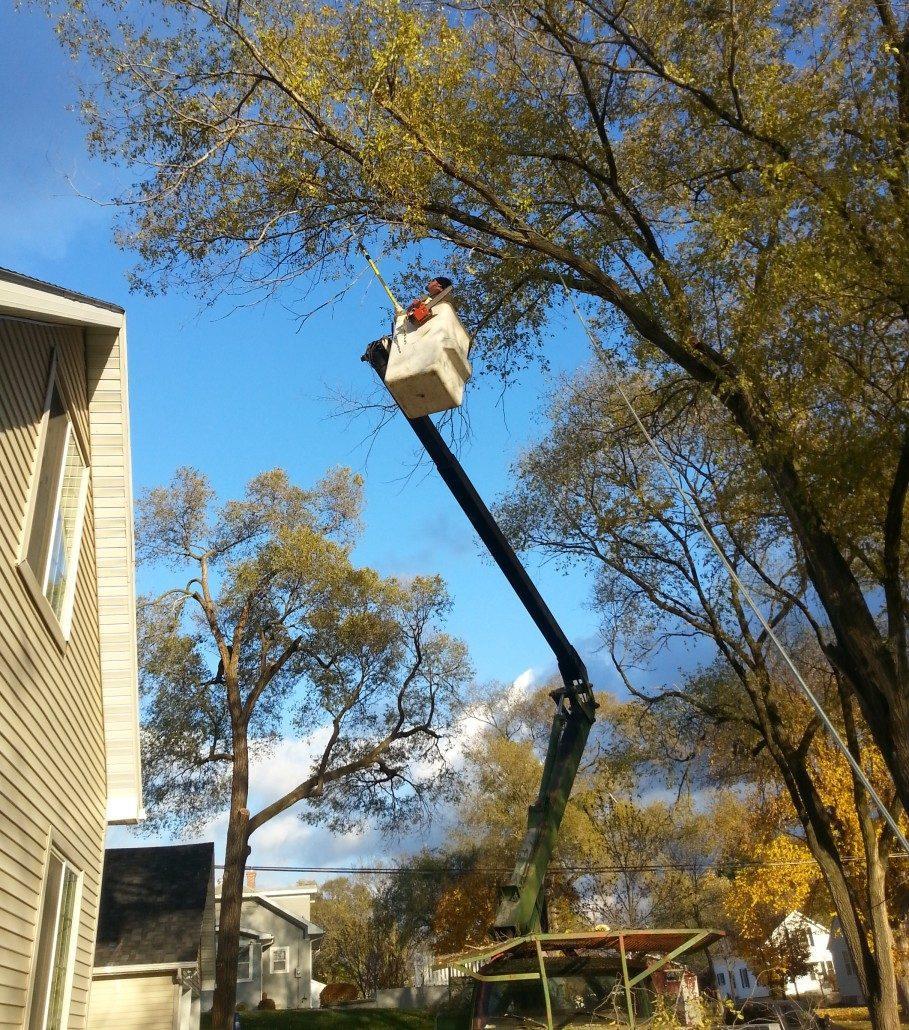 tree-services-15