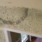 mold-remediation-4
