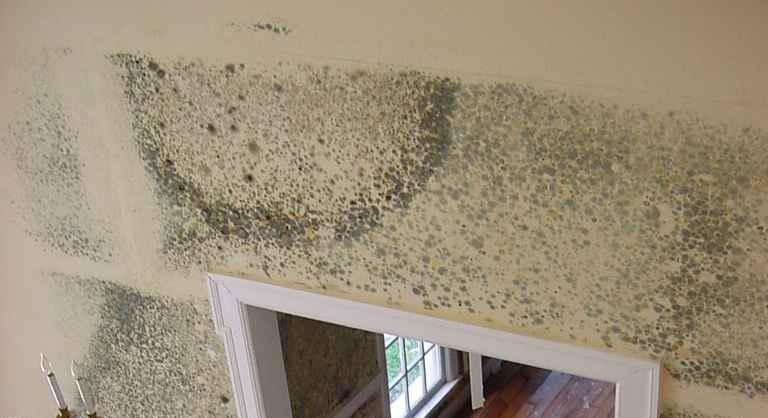 mold-remediation-4