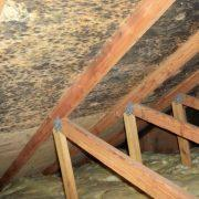 mold-remediation-6